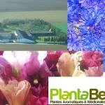 Plantabenèze